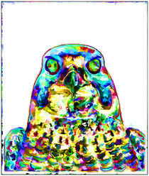 Peregrine Falcon von lanjee chee
