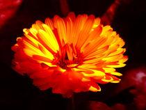 Blumenblüte von acrylice