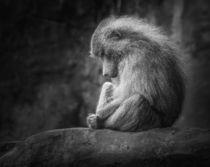 Lonely Monkey by Ingo Menhard