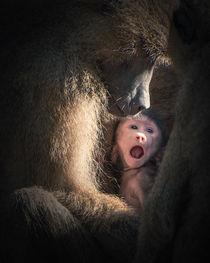 Save monkey baby by Ingo Menhard