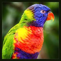 Paradise bird von Ingo Menhard