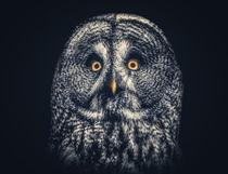 Owl Joe von Ingo Menhard