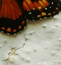 Borboleta 5 von Paula Carvalho