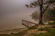 foggy morning by Bor Rojnik