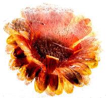 Flower von naturlichtfarben