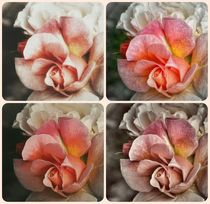 Sorbet Rose Vintage Photography ~by bebra von bebra