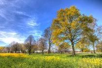 Summertime Farm England von David Pyatt