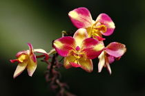 Orchideen by fotoping