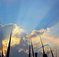 strahlender Himmel by Martina Lender-Frase