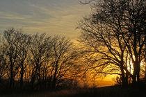 Evening Falls von Mira Sirius