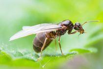 Geflügeltes Insekt von toeffelshop