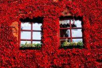 Herbstliche Aussichten von Peter Hebgen