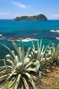 Islet and coastal vegetation by Gaspar Avila