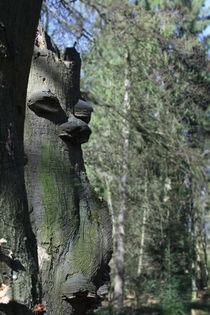 Zunderschwamm von Wälder und Baumveteranen