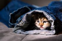 Kitten im Jeanstunnel von Susi Stark