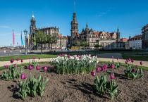 Die Dresdner Altstadt im Frühling II – Fotografie von elbvue von elbvue