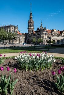 Die Dresdner Altstadt im Frühling I – Fotografie von elbvue by elbvue