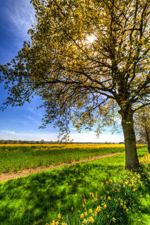 The Daffodil Summer Farm von David Pyatt