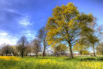 Summer Farm Trees Art by David Pyatt