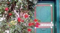 Bunte Tür mit Rosen, Warnemünde by Steffanie Reimann