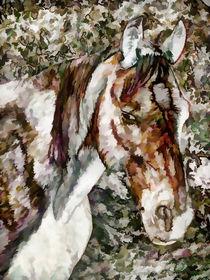 Portrait of Red Horse von lanjee chee