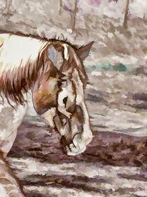 Portrait of Red Horse in summer von lanjee chee