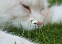 Wenn du eine Blume liebst.... by Photo-Art Gabi Lahl