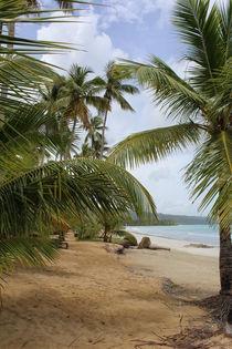 Caribbean Beach by Tricia Rabanal