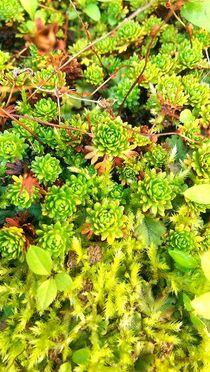 Saftig grüne Pflanzen by mia-f
