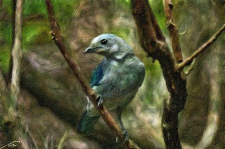 Kleiner-vogel-neue-groesse-hdr-adobe