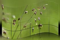 Gräser - Zittergras by Chris Berger