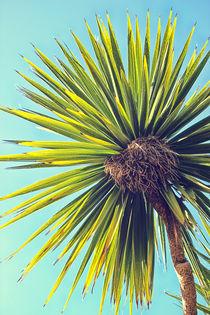 Tropical Shade by Vicki Field