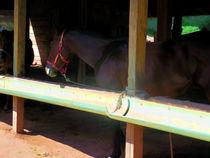 Horse in shelter 3 von lanjee chee