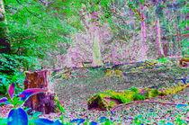 Natur Abstrakt by Anita Becker