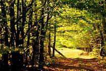 Aus dem Wald by Anita Becker