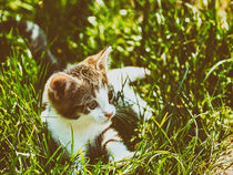 Baby Cat Playing In Grass von Radu Bercan
