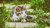 Baby Cat Playing In Grass by Radu Bercan