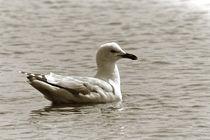Schwimm Vogel, schwimm ! von leddermann