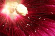 Ein ganzes Universum in einer Blüte by Hendrik Molch