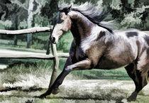 Horse in pasture von lanjee chee