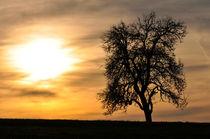 Baum in der Abendsonne by Anita Becker