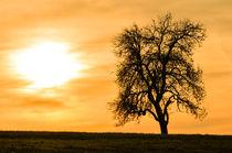 Baum in der Abendsonne gelbe Version by Anita Becker
