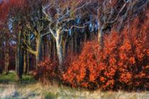 Feuerwald von moqui