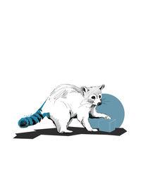 Raccoon von Gerhard Buchegger