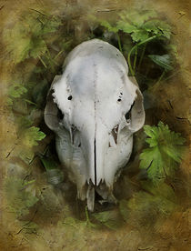 Deer Skull and Leaves von rambler
