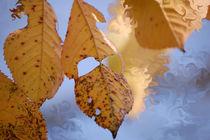 Herbstkirsche von Nikola Hahn