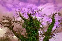 Efeuzauberbaum - Herbst von Nikola Hahn
