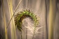 Gras von Nikola Hahn