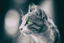 Domestic Cat Profile Portrait von Radu Bercan