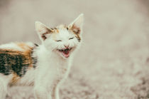 Cute Cat Meowing With A Funny Laughing Face von Radu Bercan
